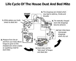 dust mite cycle