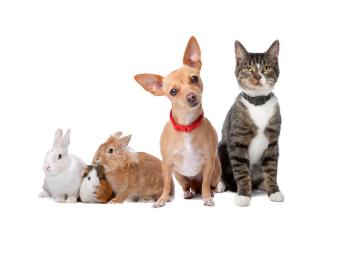 pet allergy image